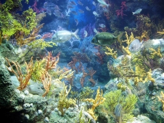 Aquadec acuario barcelona
