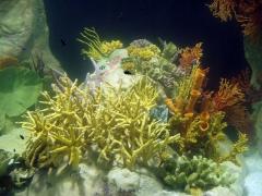Aquadec faunia arrecife tropical