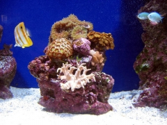 Aquarium finisterrae acuario