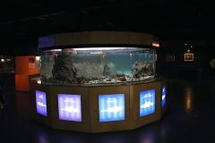 Acuario intermareal casa peces