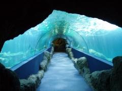 Grandes acuarios, tuneles de metacrilato