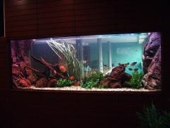 Instalacion y mantenimiento de acuarios