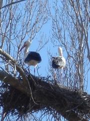 Lugar idoneo para avistar aves como cigüeñas, avutardas, garzas,rapaces, ...