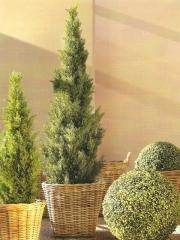 Www.articoencasa.com te trae cipreses y bolas de todos los tama�os para decorar terrazas y todo lo que se te ocurra...