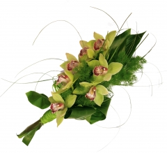 orquídeas verdes