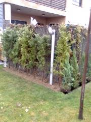 Plantación