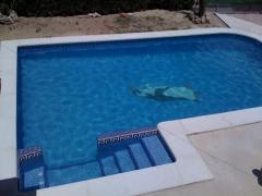 piscina con entrada lateral, asiento de hidromasaje y dibujo pingüino