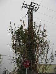 Torre de alta tension 20.000 v. sin mantenimiento.