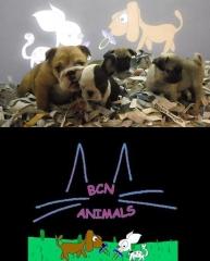 Cachorros con pedigree solo de criadores nacionales.