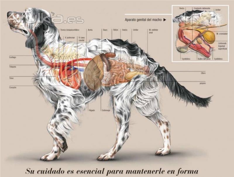 Hermosa Anatomía Externa Hembra Imágenes - Anatomía de Las ...