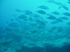 Dive center corralejo, s. l. - foto 16