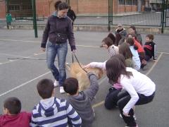 Etolcanin educación canina,adiestramiento y etologia aplicada - foto 2
