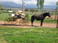 Carruaje a caballo