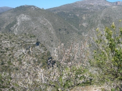 Cerezo en flor la vall de laguar casa rural