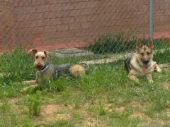 Residencias caninas madrid-voran