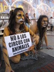 Por un circo sin animales, madrid