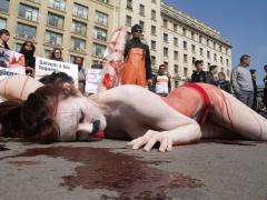 Contra la matanza de focas en canadá, barcelona