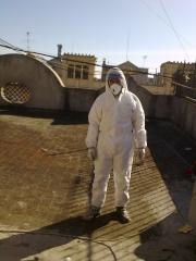 Pest control  lateristesta - foto 35
