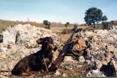El sauzal teckels cachorros teckel una de las mejores razas para la caza