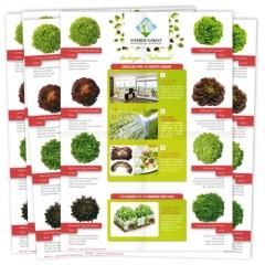 Interior folleto promocional para la venta de Salanova® para el cliente Viveros Gargo