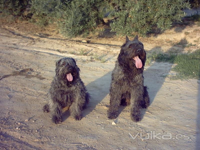 peluqueria canina zoraican