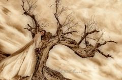 Bodas en el desierto almeriense, decorados cinematogr�ficos.