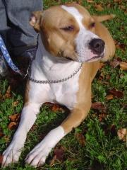 Etolcanin educación canina,adiestramiento y etologia aplicada - foto 15