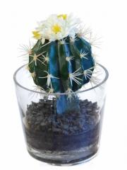 Cactus artificiales de calidad. oasisdecor.com cactus artificial en maceta de cristal.
