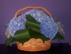 Cesta hortensias azules