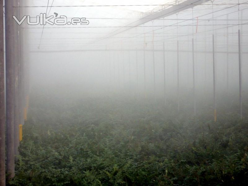 Las instalaciones de Frialia en invernaderos son una garantía de calidad y ahorro ya que producimos los aerosoles ...