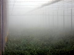 Las instalaciones de Frialia en invernaderos son una garant�a de calidad y ahorro ya que producimos los aerosoles ...