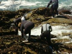 Mar gourmet, marisco y pescado gallego a domicilio