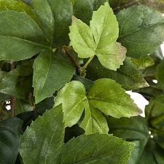 Planta artificial colgante maple detalle. lallimona.com