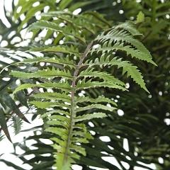 Planta artificial helecho detalle. lallimona.com