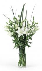 Liliums blancos
