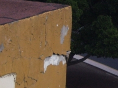 Desprendimientos en fachada.peligro de caída.