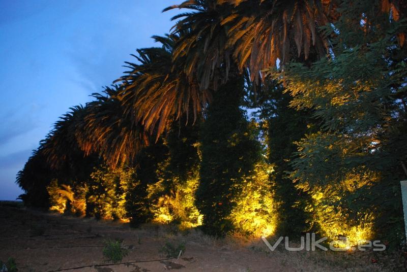 Foto iluminacion paseo palmeras hacienda la vara for Iluminacion para palmeras