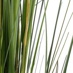 Planta artificial onion grass 1 en la llimona home