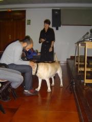 Noble y fiel amigo anfa :ponencia josune gomez-lago asoc. bubastis terapia asistida con animales