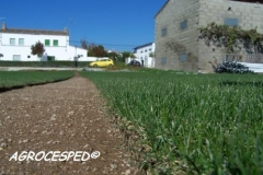 Cultivo cesped natural agrocesped