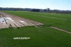 Plantacion cesped natural agrocesped
