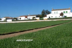 Cesped natural para tepes o planchas agrocesped