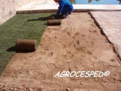 Plantar cesped natural en rollos o tepes agrocesped