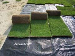 Rollos de cesped natural o tepes listos para plantar agrocesped