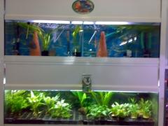 Bateria de acuarios de peces y plantas de pajareria amazonas