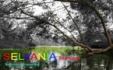 Selvania Manises