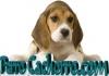 Perro Cachorro.com