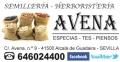 Semillería-Herboristería Avena